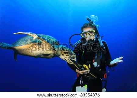 Female Scuba Diver encounters friendly Hawksbill Sea Turtle - stock photo