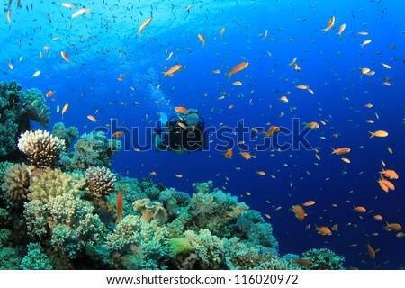 Female Scuba Diver exploring coral reef underwater - stock photo
