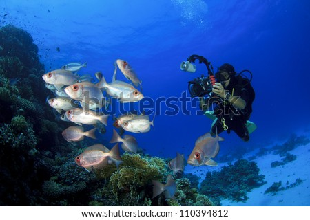 Female Scuba Diver takes Underwater Photographs of School of Fish on coral reef - stock photo
