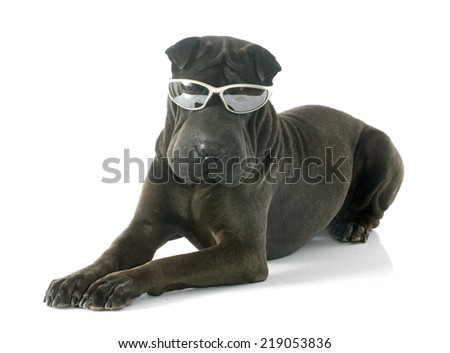 female shar pei and glasses in front of white background