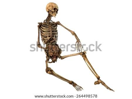 Sitting Human Skeleton Diagram House Wiring Diagram Symbols