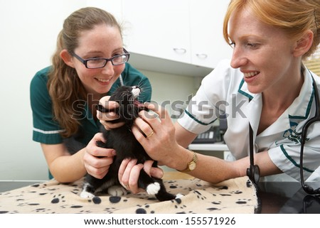 Female Vet Examining Cat In Surgery - stock photo
