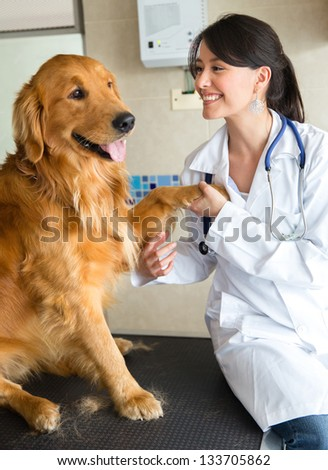Female vet smiling with a cute dog - stock photo