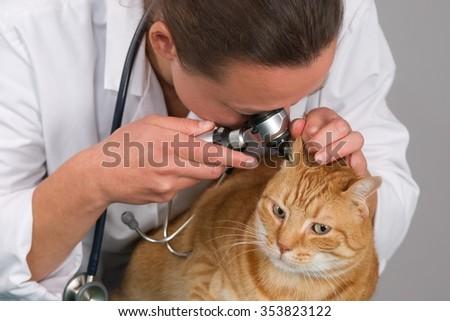 insure my cat