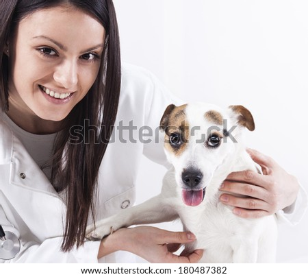 female veterinarian examining the dog at the clinic