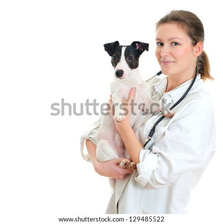 Female veterinarian holding jack russell terrier. Isolated on white - stock photo