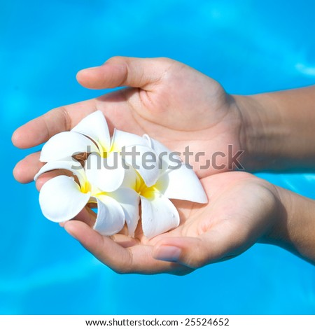 Feminine hands holding a bunch of white frangipani against blue water