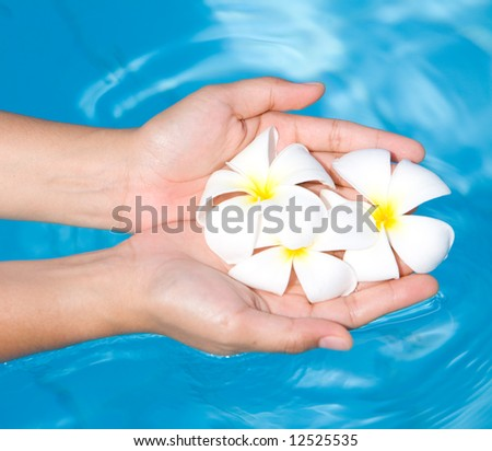 Feminine hands with white frangipani against blue water