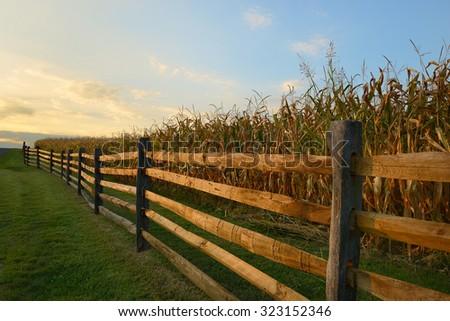 Fence Along Corn Field at Sunset - stock photo