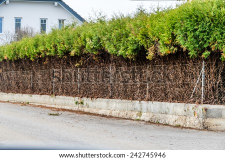 fence and green hedge, a symbol of growth, privacy, generational change - stock photo