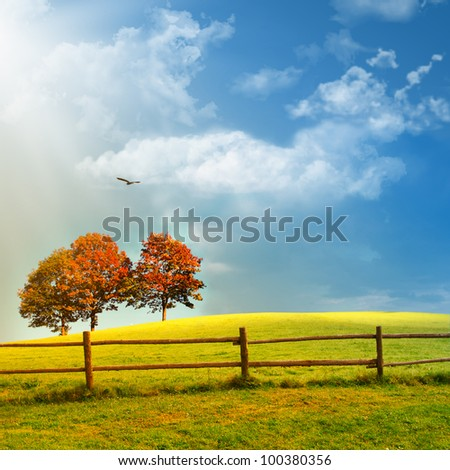 Fence and trees on the field,summer in the nature - stock photo