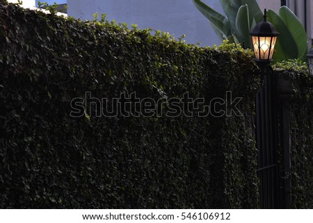 Fence covered in foliage - Garden District, New Orleans, Louisiana, USA