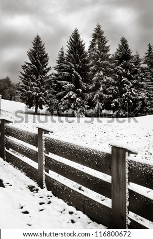 Fence in the foreground and pines in background with first snowfall of the season, Kitzbuehel, Austria - stock photo