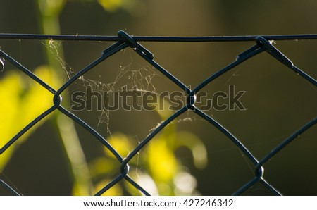 fence of garden with spider web