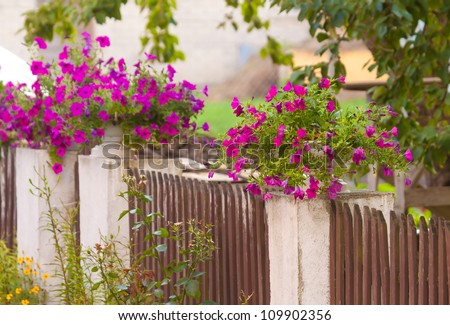 Fence with purple flowers - stock photo