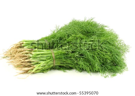 Fennel bunch on white background