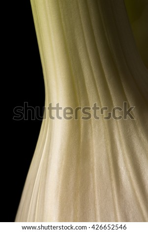 Fennel on a black background