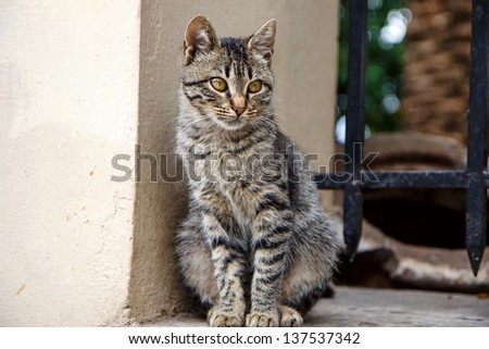 Feral cat in Athens, Greece - stock photo