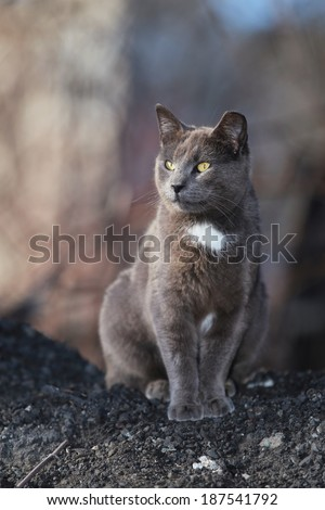 Feral Cats in the Wild Hoping and Waiting to be Fed - stock photo
