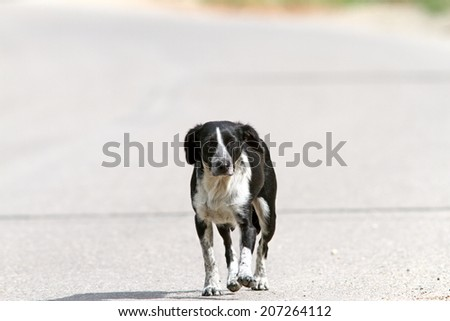 feral dog walking on the street at noon - stock photo