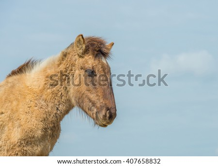 Feral horse in nature in spring