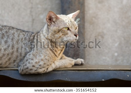 feral street cat relaxing watching the world go by - stock photo