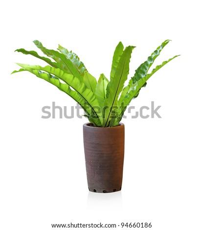 fern - stock photo