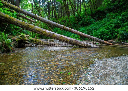Fern Canyon in the Prairie Creek Redwoods State Park in Humboldt County, California - stock photo