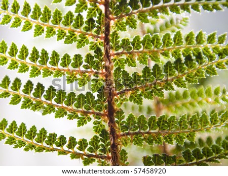 Fern details in lush colours