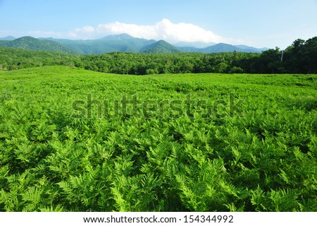 Fern field in national park, north of Japan - stock photo