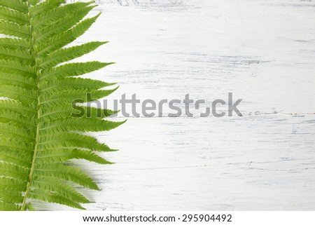 Fern green leaves on white wooden background.