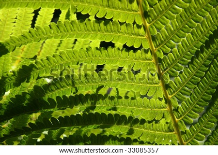 fern green texture - stock photo