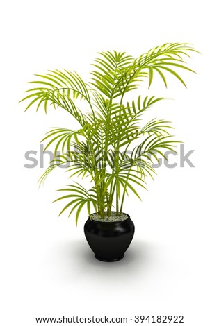 fern green vase in black pot isolated on white background