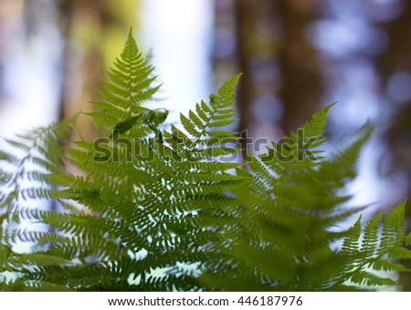 fern growing in the forest - stock photo