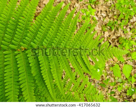 Fern in a forest