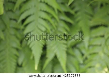 Fern leaf for background, blur. - stock photo