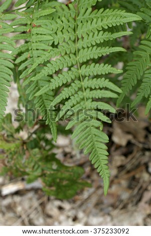 Fern leaf in the forest, close-up - stock photo
