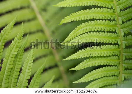 fern leaves as a background on the nature - stock photo
