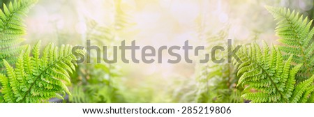 Fern leaves on blurred nature background, banner for website - stock photo