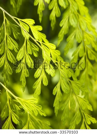 Fern leaves pattern - stock photo