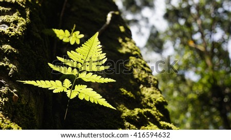 fern on tree in the forest - stock photo