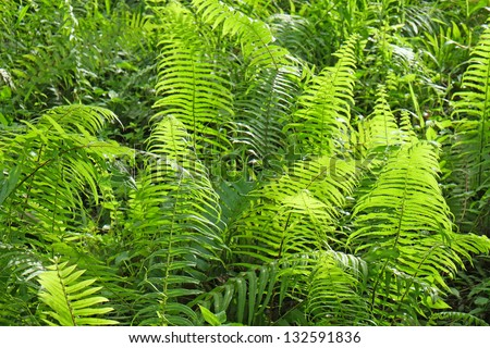 Fern Plants At A Tropical Rainforest - stock photo