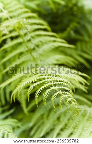 Fern plants in the woods - stock photo