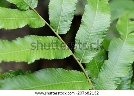 fern, stem pattern of green fern tree branch in nature - stock photo