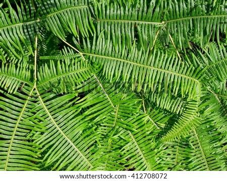 fern texture background - stock photo