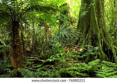 Fern tree in tropical jungle rain forest - stock photo