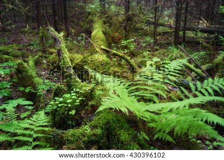 Fern, Wood Sorrel, Moss on tree in the forest. Selective focus