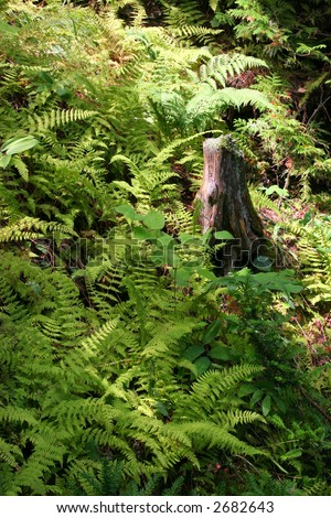 ferns found on washington island - stock photo