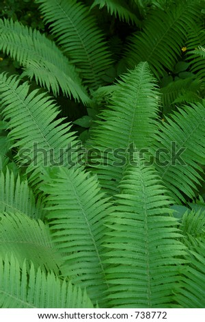 Ferns in the Bialowieza Forest,Europe