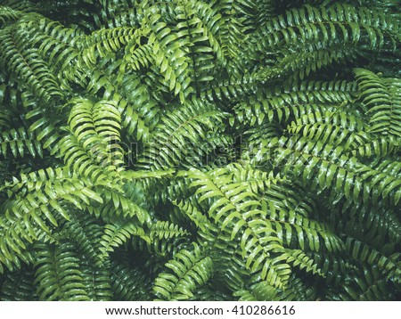Ferns Leaf Forest Outdoor Nature abstract Background - stock photo